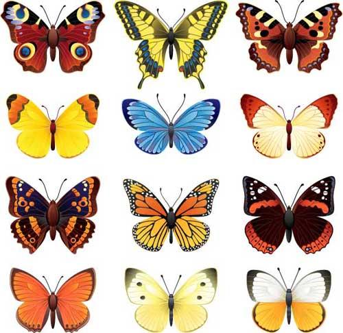set_mariposas